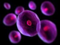 celule stem 3 200x150 Ce sunt celulele stem?