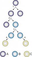diviziunea si diferentierea celulelor stem 114x200 Ce sunt celulele stem?