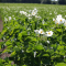 Cartofii ecologici – ce este mai bun pentru copilul tău!